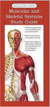 Illustrated Pocket Anatomy: Muscular System & Skel (View larger image)
