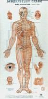 Acupuncture Charts: Wall Form (x4)